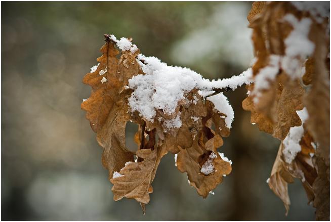 Jesienna zima wiosną