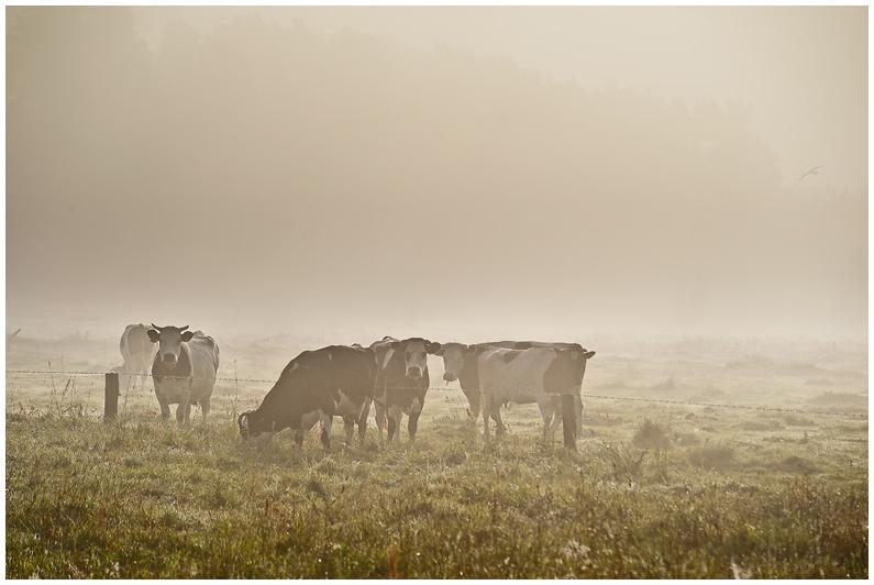 Krajobraz Kurpiowski Fotografia